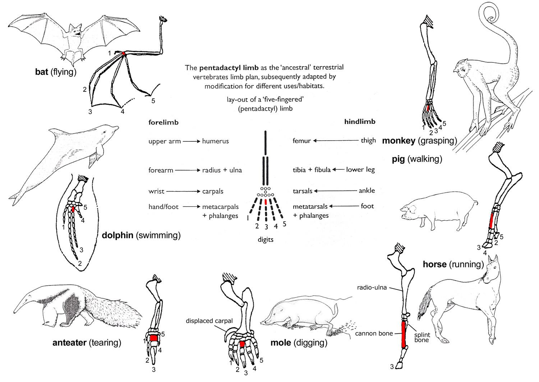 Mammalia mammals animalia alt ccuart Image collections