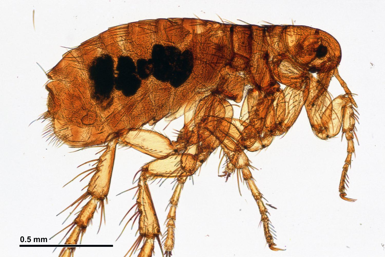 arthropoda arthropods animalia