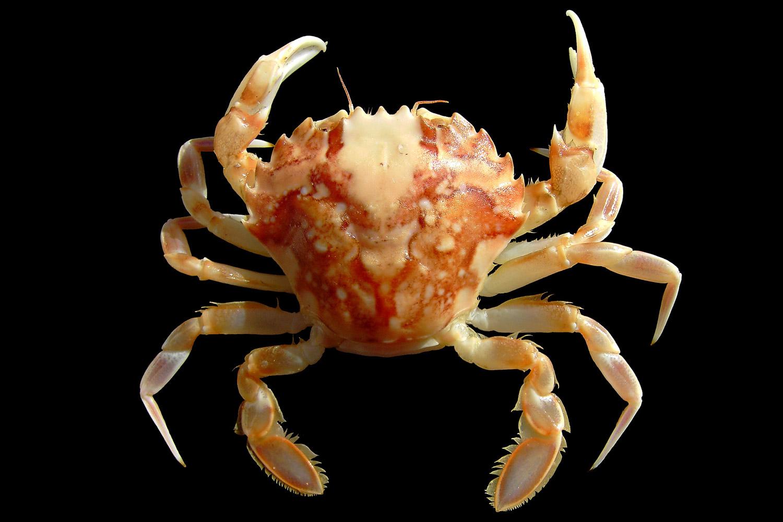 crustacean | Science Buzz