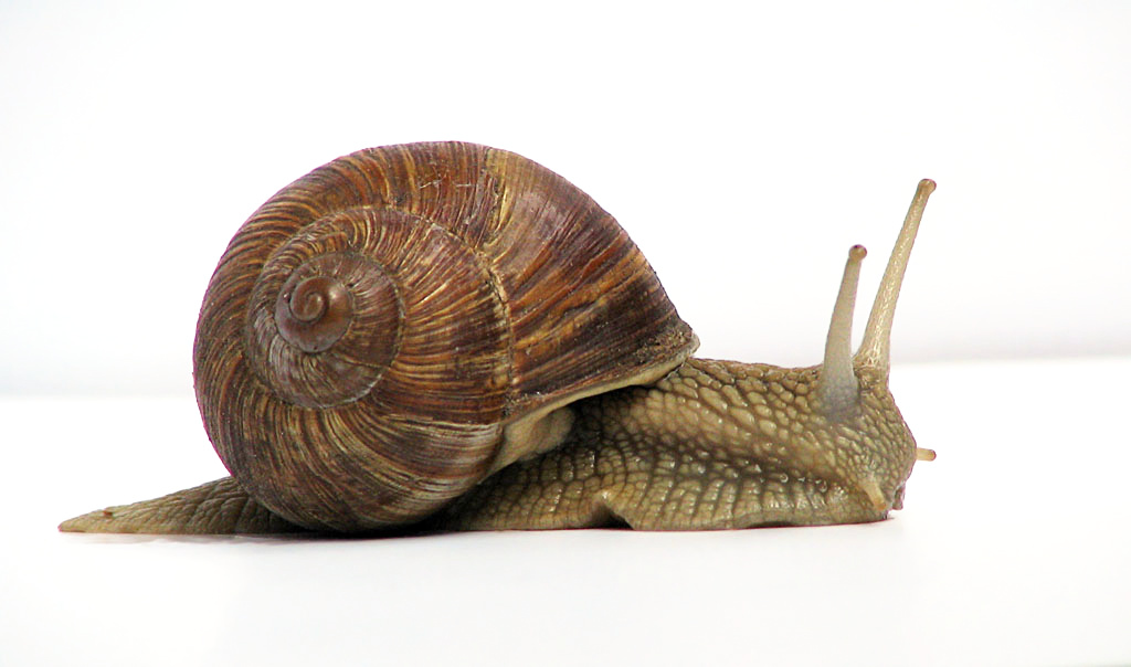 molluscs mollusca animalia