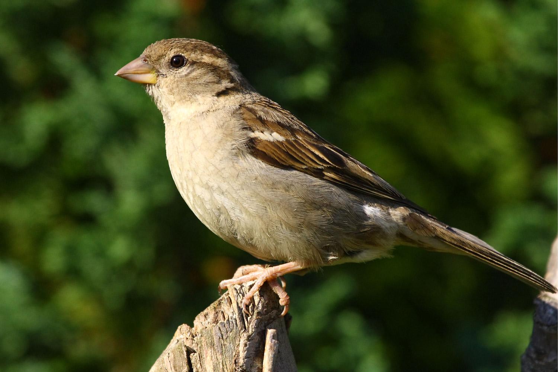 aves birds animalia