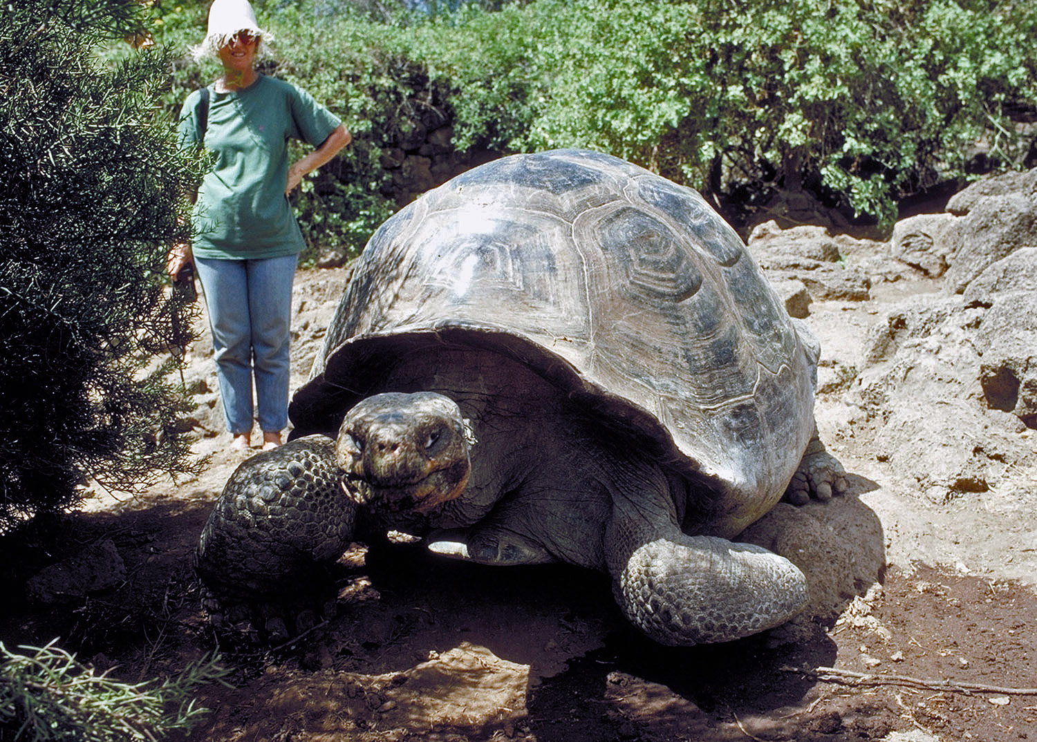 You Won't Find These Animals Anywhere Else In The World |Galapagos Tortoise