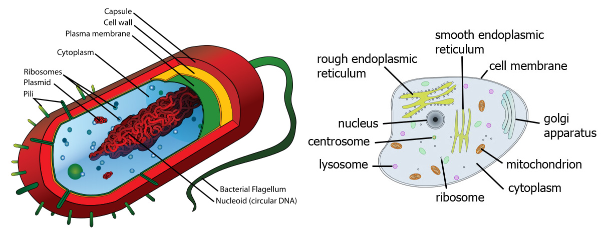 how to make a prokaryotic cell model