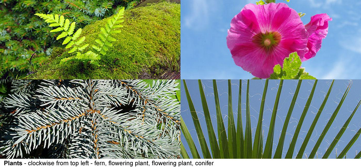 Plants flowering ...
