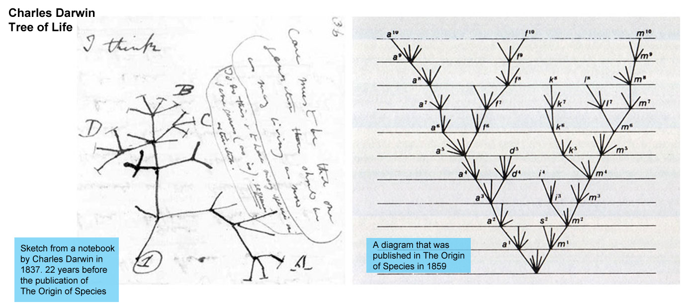 Charles Darwin - Tree of Life - left is a sketch from a notebook by Charles  								Darwin in 1837 22 years before The Origin of Species  								was published. Right is a diagram that was published  								in the book in 1859